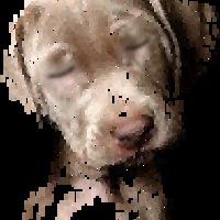 a pislogó kutyus és a horgonyzó dzsunka