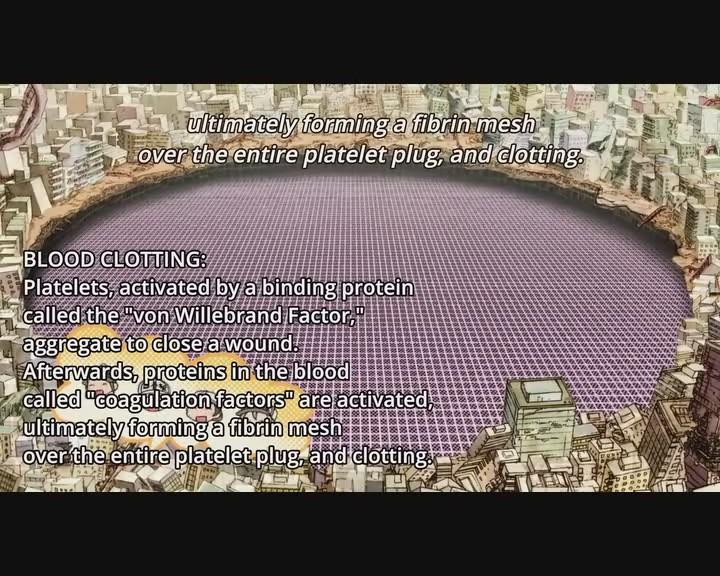 watch_hataraku_saibou_tv_episode_2_online_free_kissanime_0003.jpg