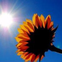 Relaxáció és a Nap