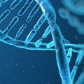 Sejtjeinkben található méreganyagok