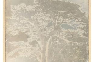 Antik illatrekonstrukciók: Cédre du Libanon 1892
