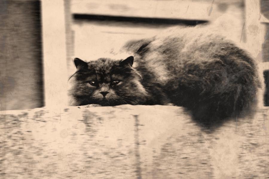 Ismeretlen macska egy kerítésen