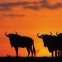 Sebezhetőségek a Safariban