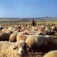 Pásztorok lakat alatt