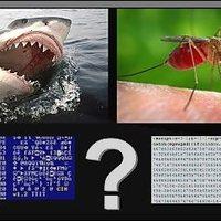 Hagyományos vírus VS. JavaScript kártevő