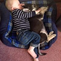 Kutya-gyerek együtt alszik