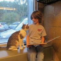 Olvasó gyerekek, játszadozó macskák