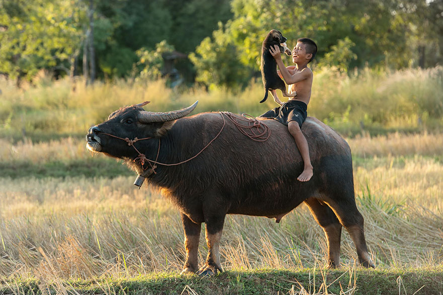 thaiföld_kisállat.jpg