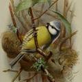 Gyönyörű madaraink I.