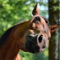Mitől túrós a ló háta?
