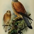 Gyönyörű madaraink II.