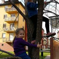 Gyerekek a fán