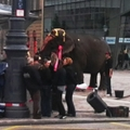 Elefánt a Kálvin téren
