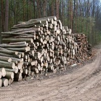 Elbaltázott faosztás.