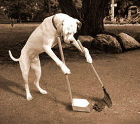 kutyaszar.jpg