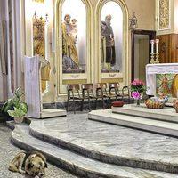 Minden nap templomba jár egy kutya