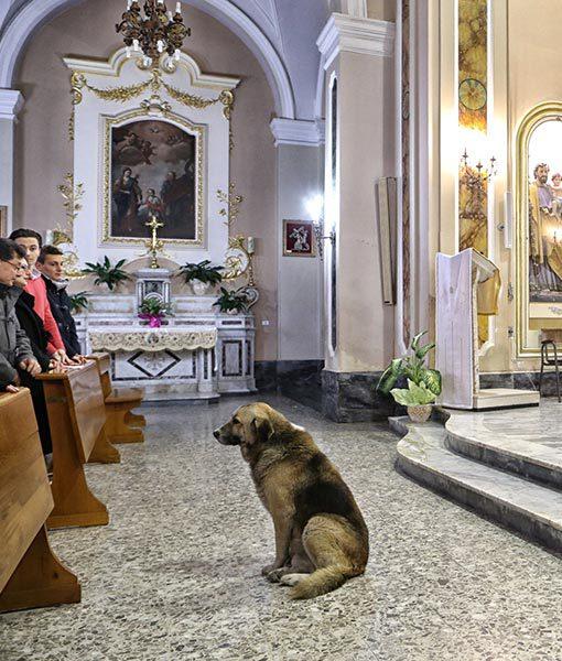 dog-mass2.jpg