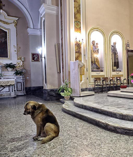 dog-mass4.jpg