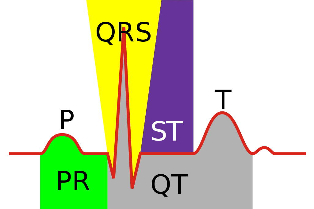 1024px-electrocardiograph_complex_svg.png