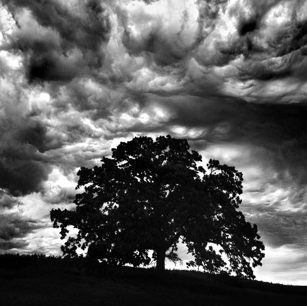 Mark Hirsch - A tölgyfa.jpg