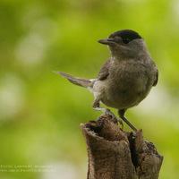 A természet képekben - Madarak