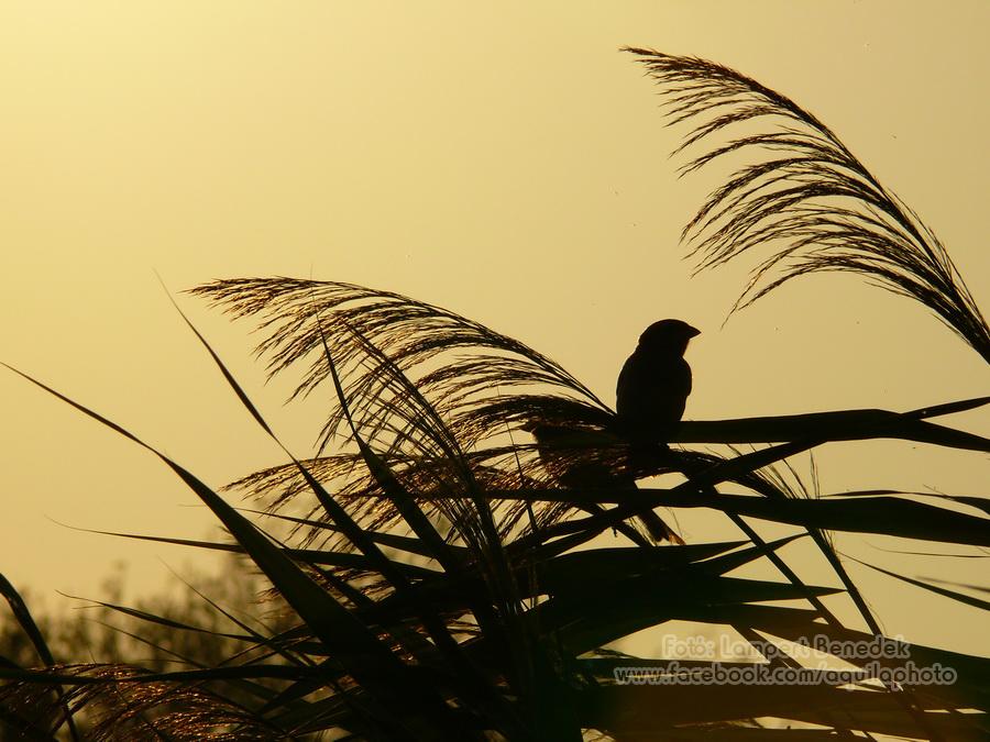 Sziluett a naplementében. Ezt a fotót azért kedvelem, mert van hangulata. Semmi különleges, csak jó nézni. Legalábbis számomra, remélem Ti is így vagytok vele :)! Igazán jó akkor lenne, ha a madár is balra nézne, de hát mindent nem lehet.