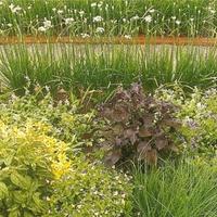salátaágy a kert dísze...