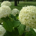 Az Esterházy emlékpark növényei