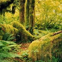 Séta egy mérsékeltövi esőerdőben (Hoh Rain Forest)