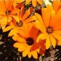 a fény tettei: narancssárga