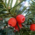 A növényvilág téli ajándékai