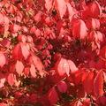 Bíbor ősz