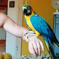 Ne félj a papagájtól!