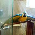 Papagájok kánikulában