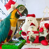 Karácsonyra papagájt? NE!