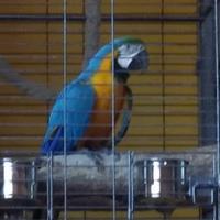 Ha megszökött a papagáj