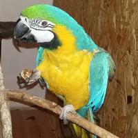 Mit ne egyen a papagáj?