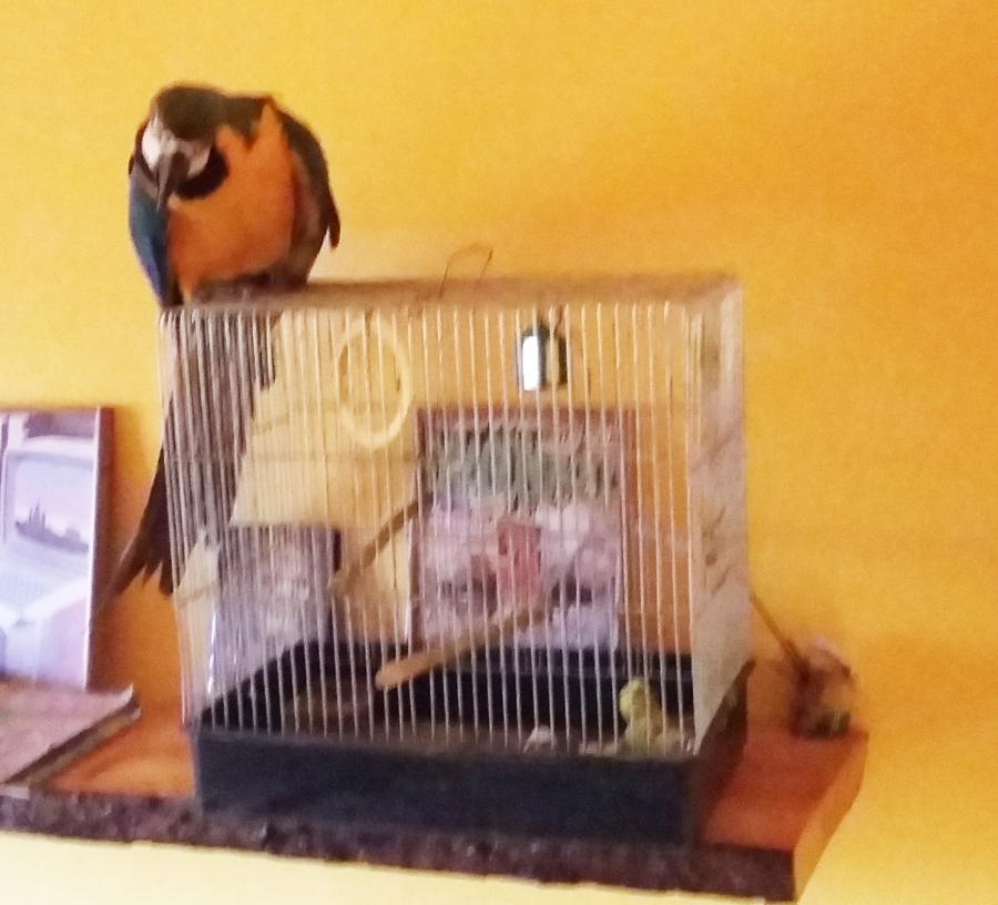 bloghu-papagaj-tartasa-kalitkaban-2.jpg