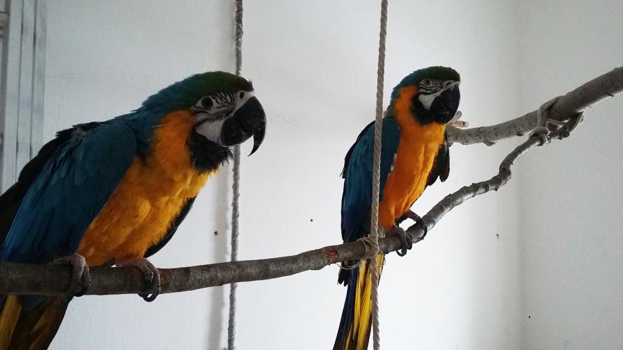bloghu-papagaj-tartasa-kalitkaban-5.jpg