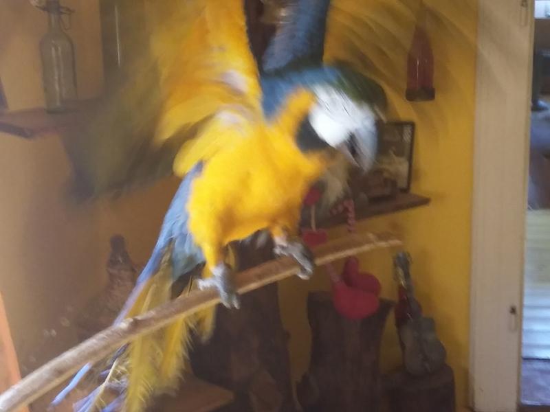 papagaj-betegsegek-a-szalmonella-3.jpg