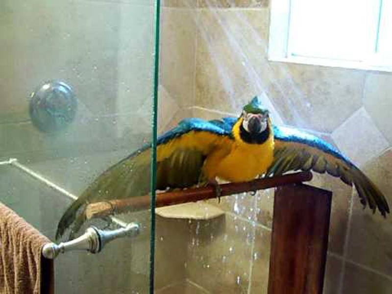 papagaj-kanikula-1.jpg