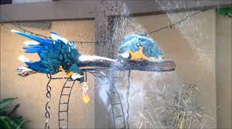 papagaj-kanikula-2.jpg
