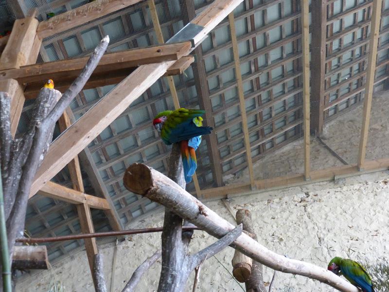 papagaj-kanikula-3.jpg