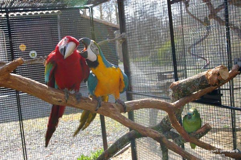 papagaj-kanikula-4.jpg