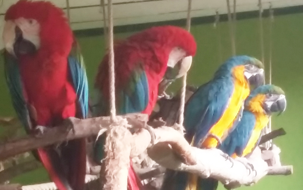 papagajcsapat.jpg