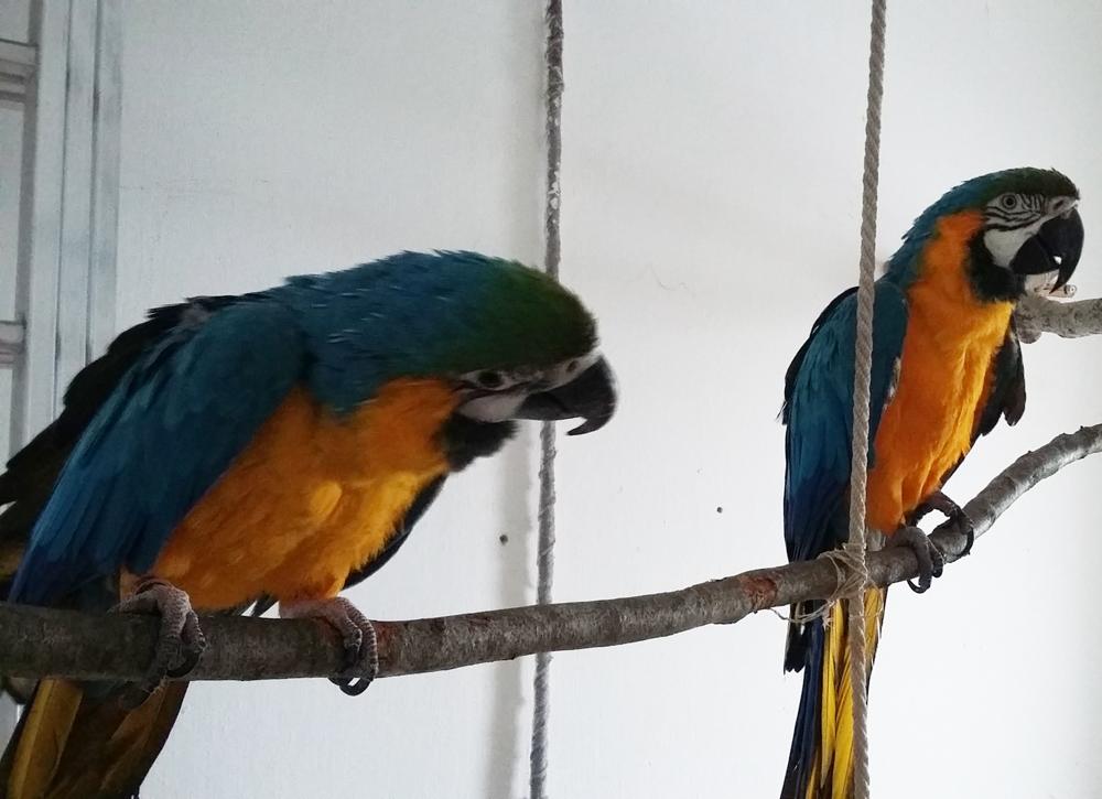 papagajok-csapatban-2.jpg
