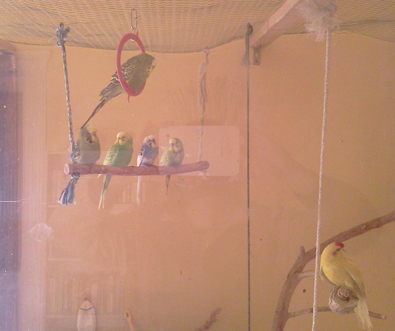 papagajok-csapatban-3.jpg