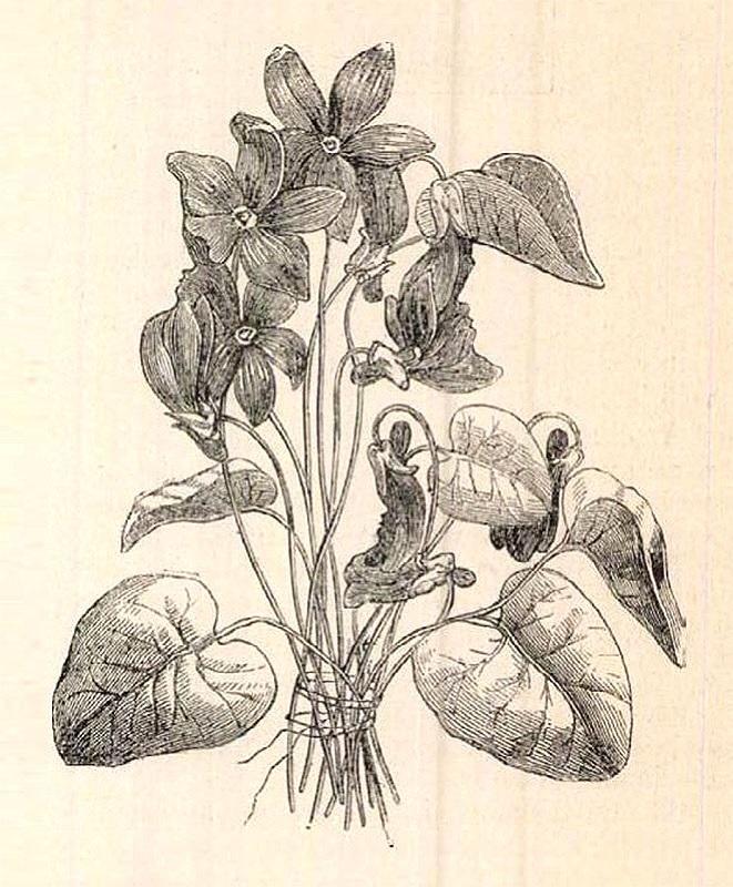 vasarnapiujsag_1890_pages676-676.jpg