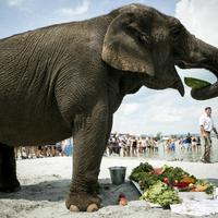 Elefántok strandolnak a Balaton partján - Szombaton jön a Cirkuszok éjszakája!