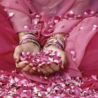 Damaszkuszi rózsa, avagy a NŐ illata